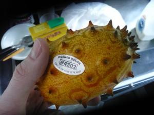 Horned Melon Phase 1
