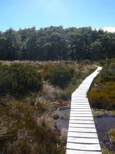 Bealey Hut Track