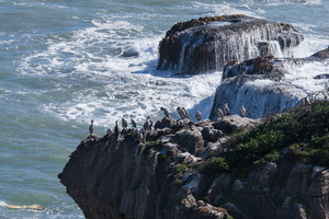 Cormorans over pancake rocks @ Papaora National Park