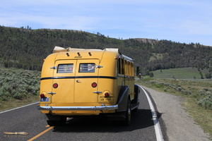Yellowstone NP famous yellow buses