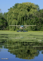 Cessna 185 Skywagon & willow tree